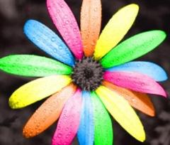 rainbow-flowers-rainbow-skies-11103483-383-397